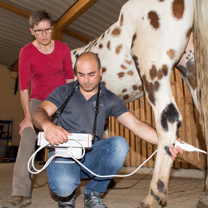 Tierarzt Sorin Popa bei der Ausuebung seines Berufes